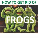 How to Get Rid of Frogs in Your Garden (Ultimate Guide) – 2019