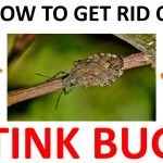 How to Get Rid of Stink Bugs Naturally (DIY Remedies) – 2019