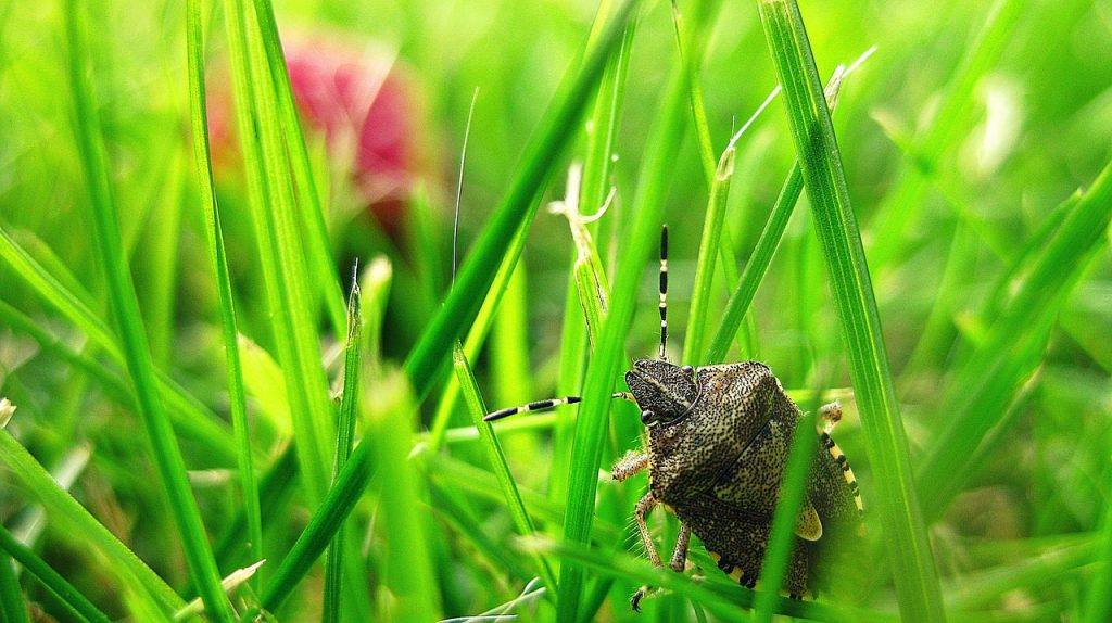 What do stink bugs eat?