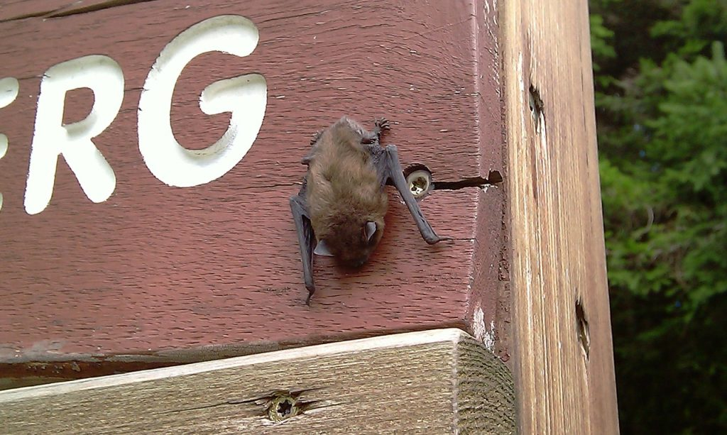Bat on a house.