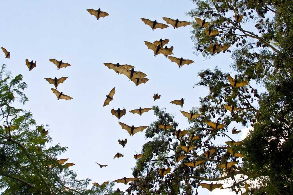 Bats flying as a colony.