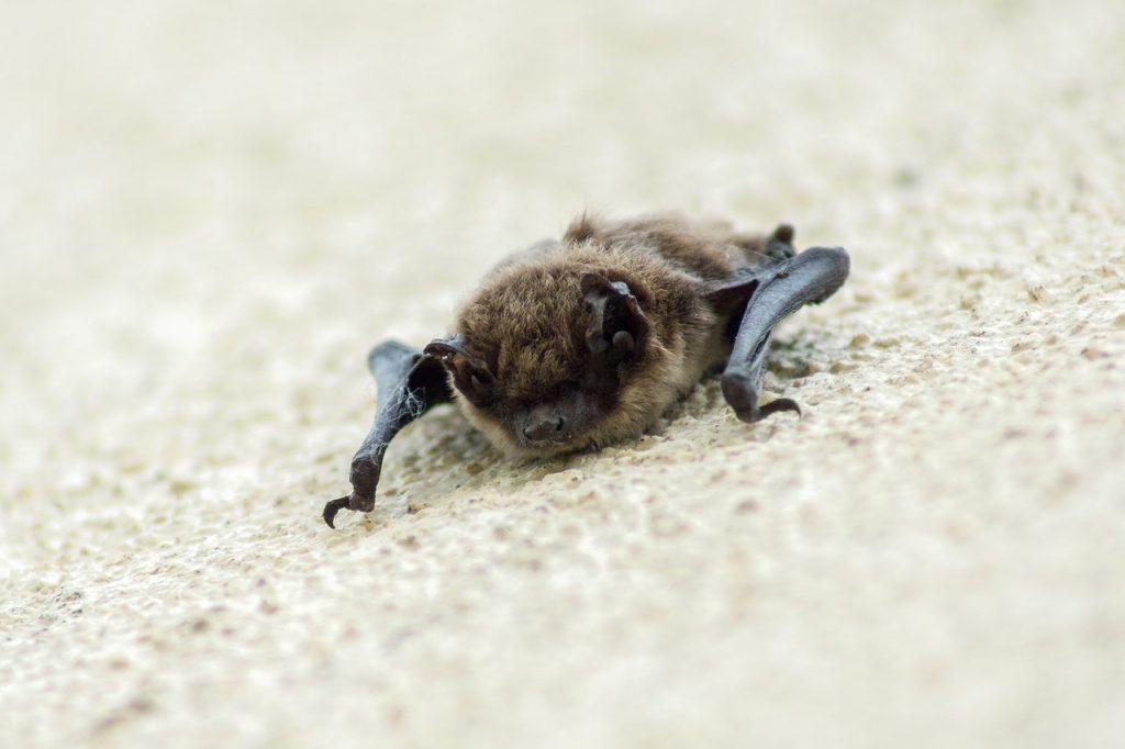 Bats in soffit.