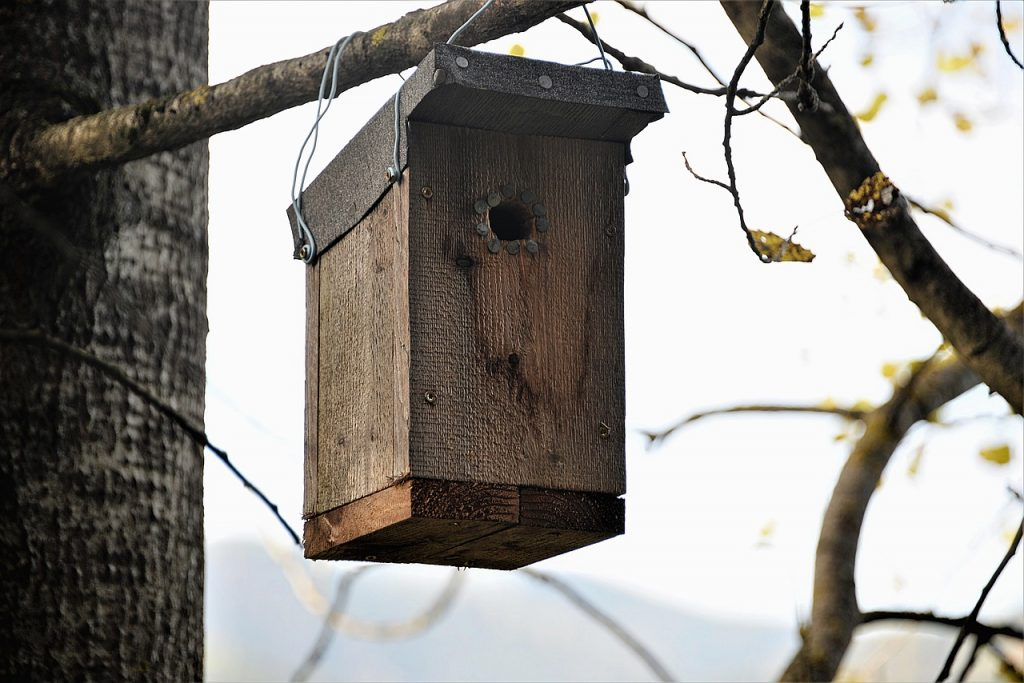 Bat boxes are effective ways to get rid of bats naturally.